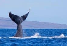 kriptoup balina altcoin